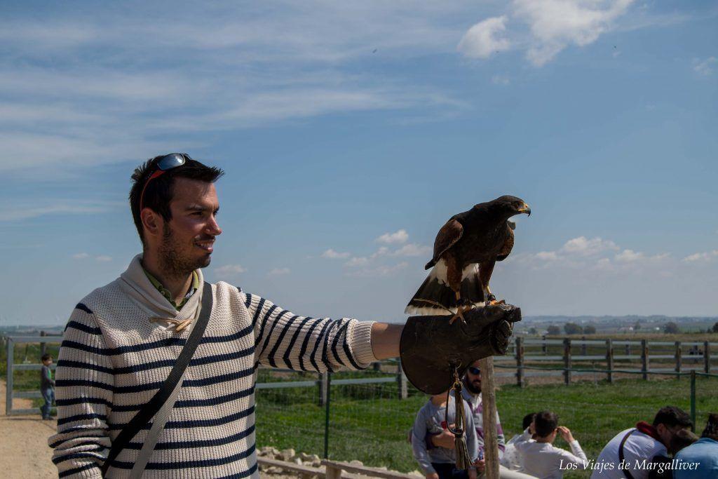 """Kike con """"Curro"""" el halcón de El Bucarito, la fábrica de Quesos de Rota - Los viajes de Margalliver"""