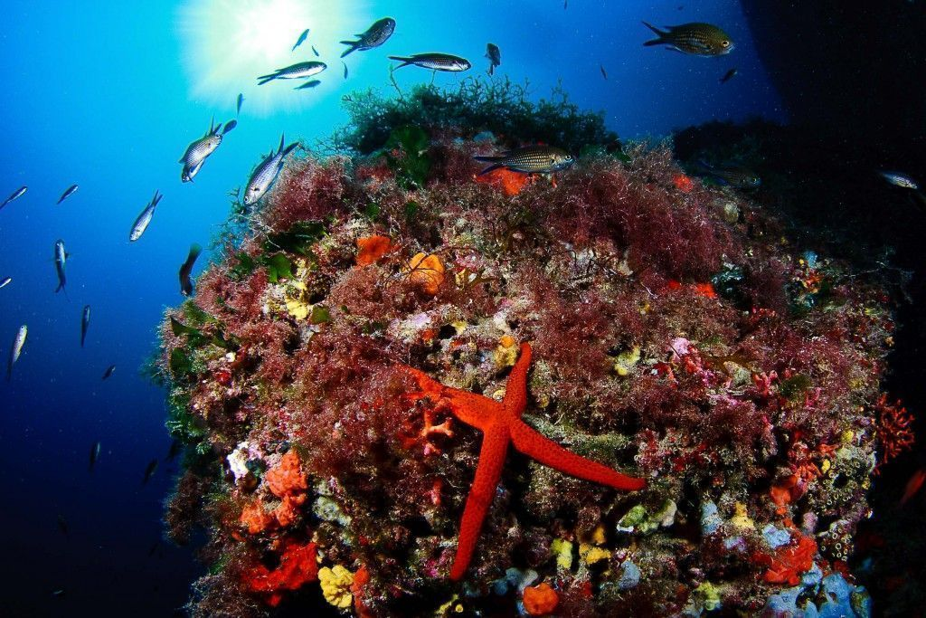 coral en aguas de formentera-los viajes de margalliver
