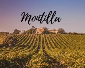 Montilla, un paseo por sus viñedos
