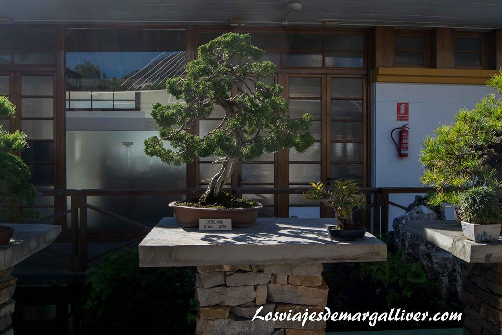 Museo del Bonsai en Marbella - Los viajes de Margalliver