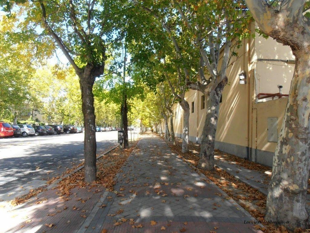 Otoño en el Pardo , Madrid - Los viajes de Margalliver