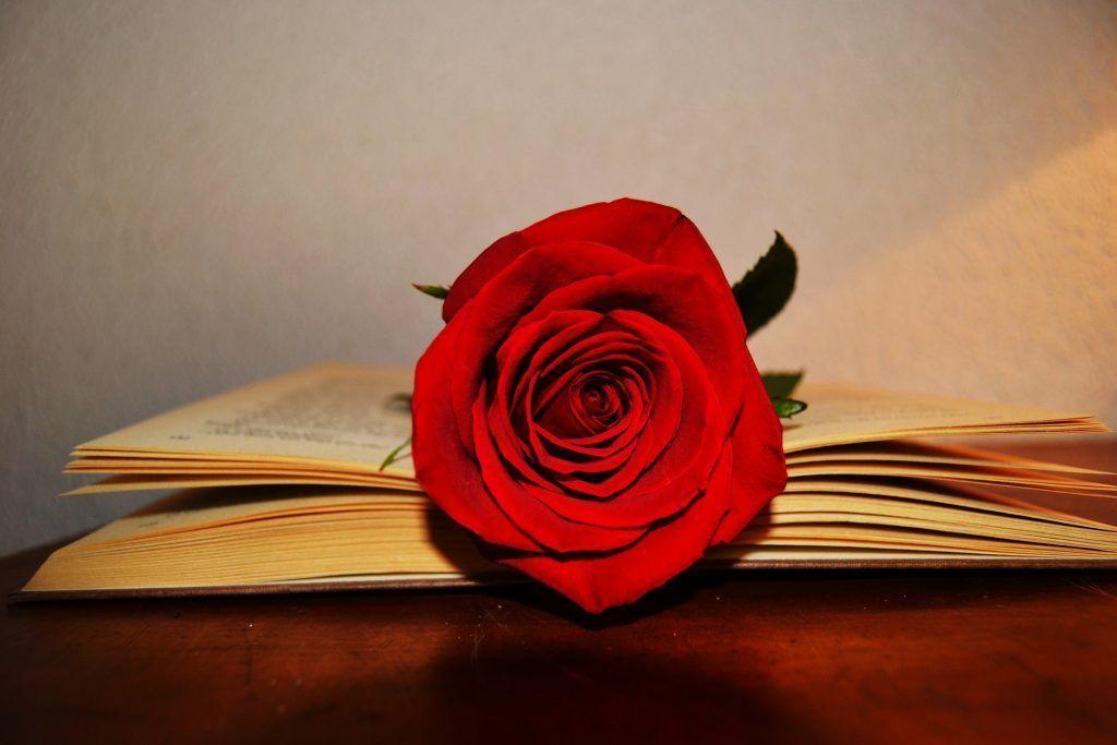 Rosa y el Libro por el día de Sant Jordi en Barcelona - Los viajes de Margalliver