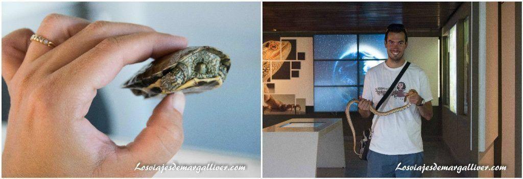 Centro de rescate de anfibios y reptiles de Alcalá la Real - Los viajes de Margalliver