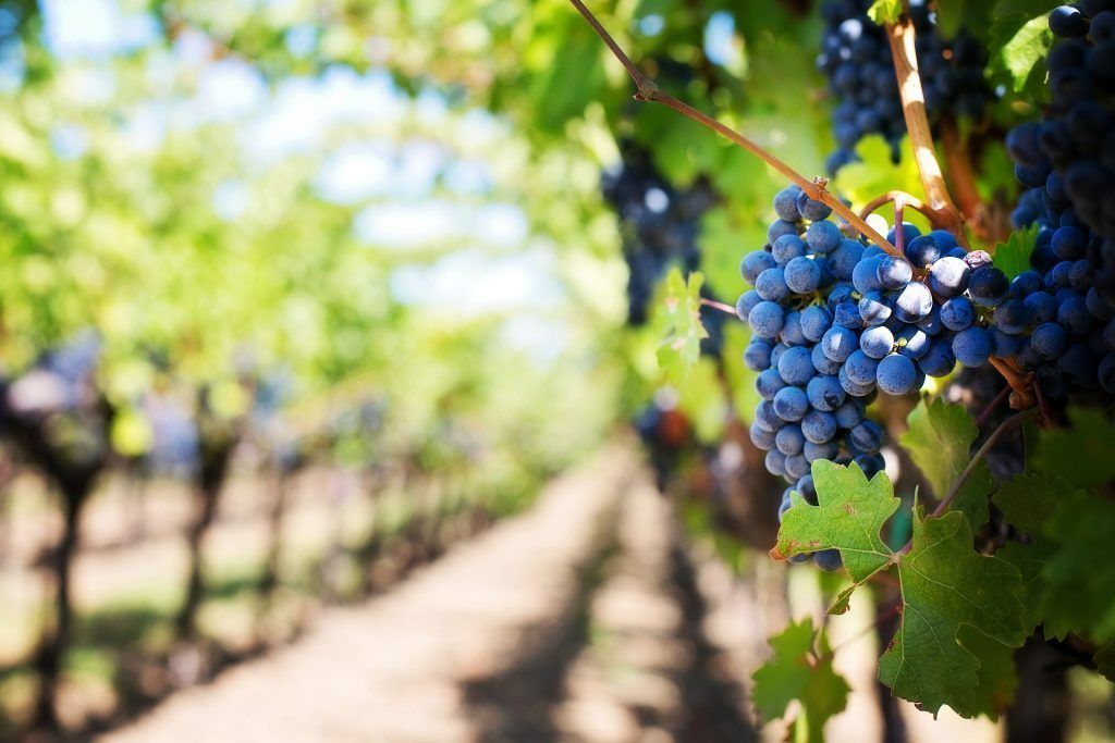 Recorrer ruta de los vinos de Mallorca - Los viajes de Margalliver