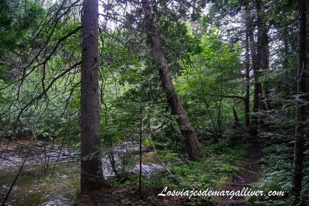Bosque cerca del Hotel lago Eau-Claire en La Maurice - Los viajes de Margalliver