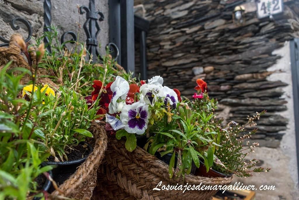 Flores de Campillo de Ranas en Guadalajara - Los viajes de Margalliver