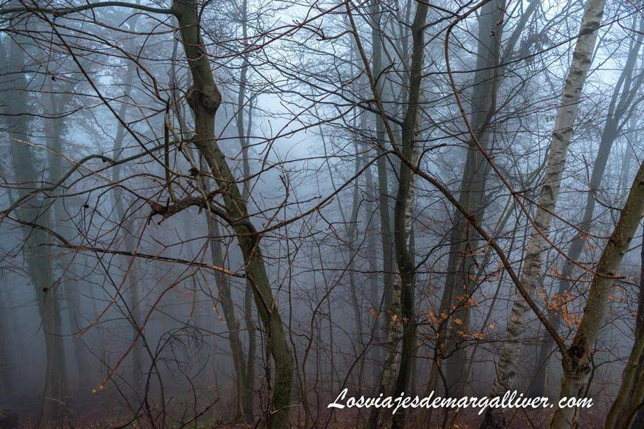 bosque con niebla en el camino al castillo de Haut-Koenigsbourg en la Alsacia - Los viajes de Margalliver