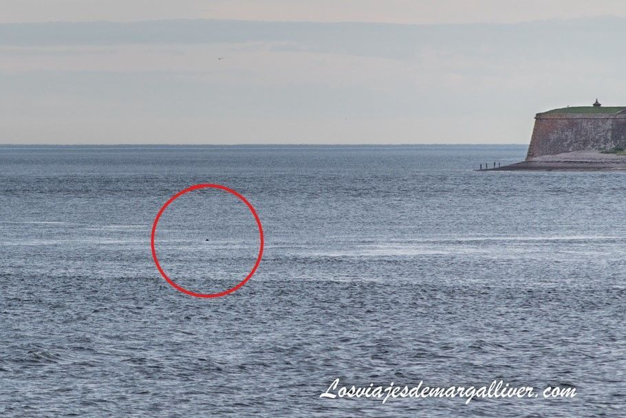 avistamiento de focas o delfines en Chanonry Point - Los viajes de Margalliver