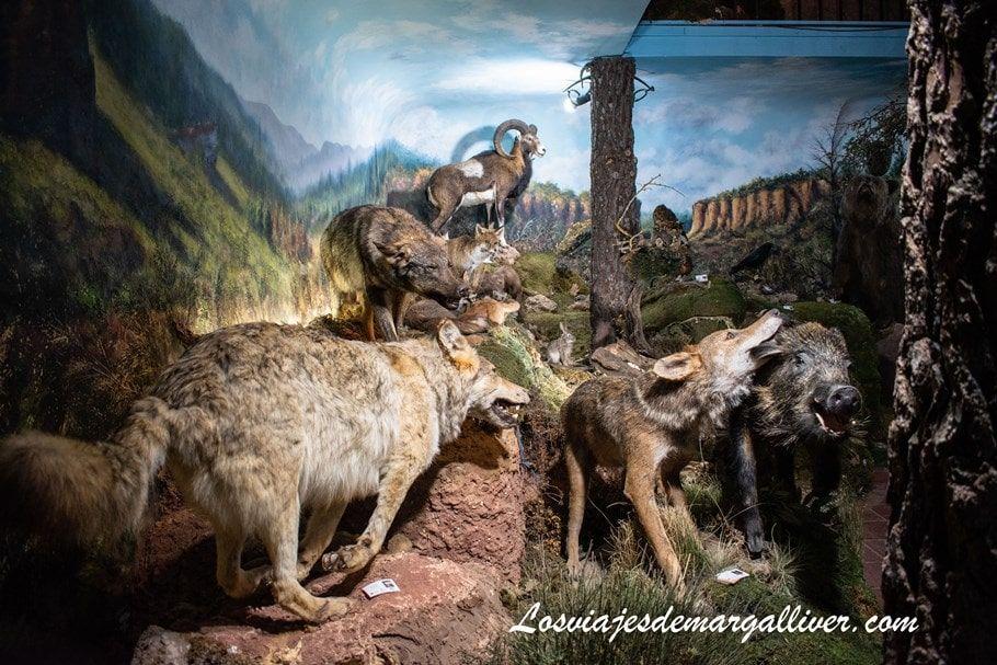 Animales disecados en el museo comarcal de Molina de Aragón - Los viajes de Margalliver