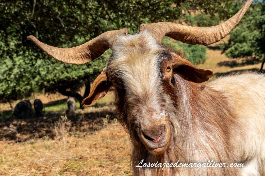 Leo, nuestro amigo de Riscos Altos en Cazalla de la Sierra - Los viajes de Margalliver