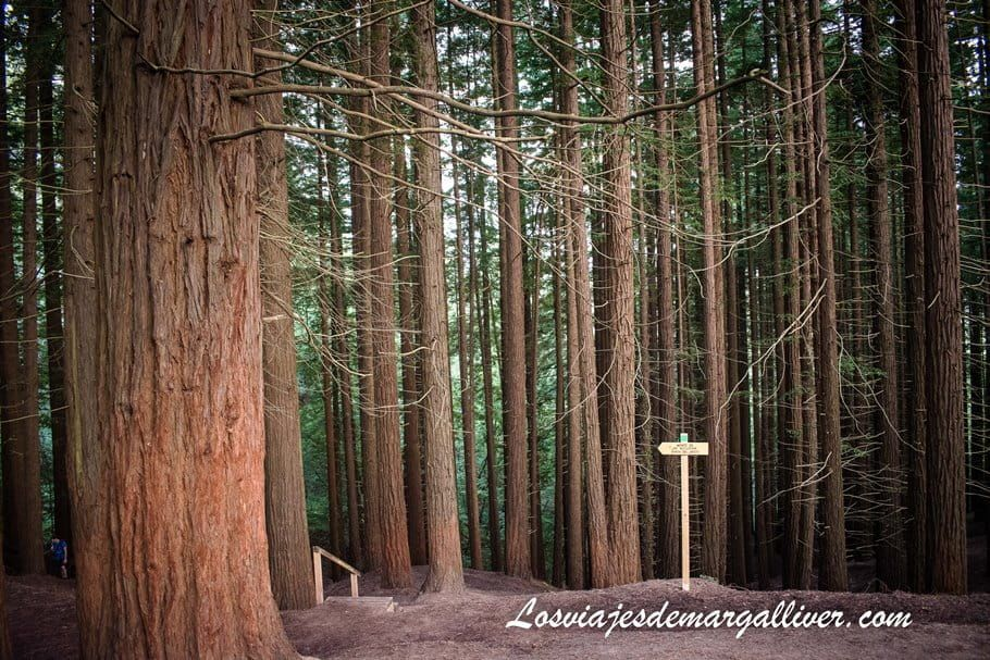 Bosque de Secuoyas del Monte Cabezón en Cantabria - Los viajes de Margalliver