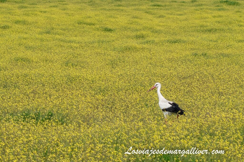 Naturaleza en la Sierra Morena de Sevilla - Los viajes de Margalliver