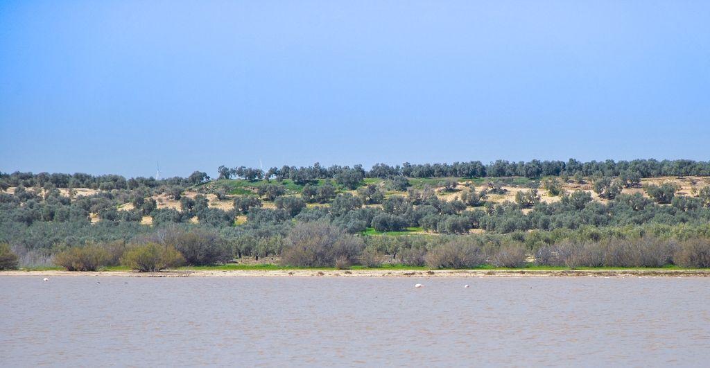 Algunos flamencos en la Laguna del Gosque en Martín de la Jara - Los viajes de Margalliver
